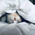 La tecnologia delle app aiuta a dormire.