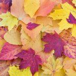 """Il """"viaggiatore d'autunno"""" secondo Musement: la cultura e la storia vincono su natura e relax"""