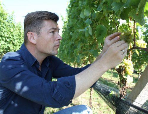 Il Sauvignon Nals Margreid. Da un vitigno che cresce in Alto Adige dalla metà del 1800 nasce uno dei bianchi altoatesini emergenti.