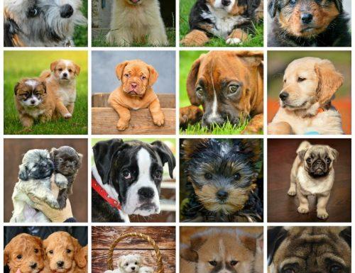 Lo stile di vita e la sedentarietà incidono sull'età del nostro cane